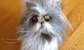 Divirta-se Com o Gato Atchium, a Mais Nova Sensação da Internet