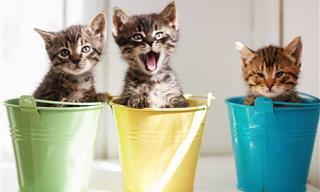 Tente não rir com estes felinos hilários... Duvido!