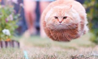 Parece Ilusão de Ótica, Mas São Gatos!