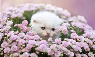 Pets com enfeites florais ficam ainda mais lindos