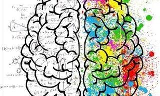 Descubra Que Área do Seu Cérebro é Mais Dominante
