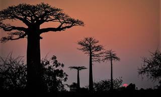 16 Imagens de Madagáscar de Tirar o Fôlego
