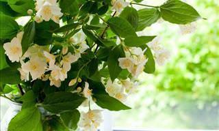 7 Plantas Que Vão Deixar Seu Lar Naturalmente Agradável