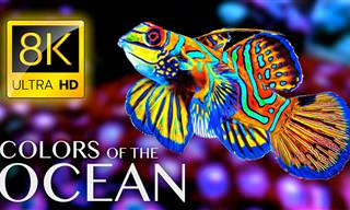 Descubra as cores hipnotizantes do oceano em ULTRA HD