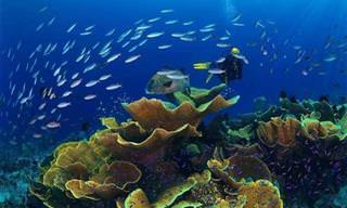 A Vida Nas Águas do Mar Vermelho!