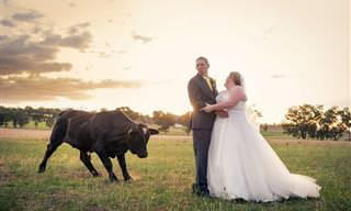 20 Fotos hilárias de casamento com 'convidados especiais'