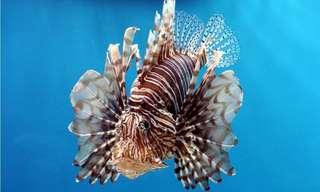 12 Esplêndidos Habitantes do Oceano
