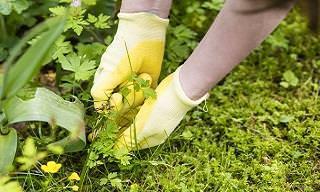 Livre-se das Ervas Daninhas Com Estes Herbicidas Naturais