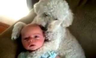 Cães felizes por terem crianças para amar!