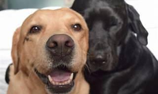 24 Razões Para Ter Dois (Ou Mais) Animais de Estimação