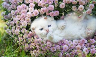 Mantenha os Gatos Longe do Jardim