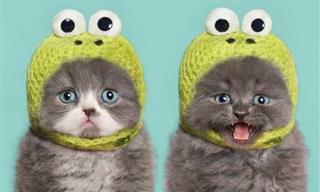 30 Fotos de Gatinhos Adoráveis e Muito Bem Vestidos!