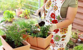 Como Manter Suas Plantas Vivas e Belas o Ano Todo
