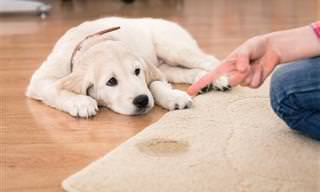 Livre-se dos Odores e Manchas de Urina de Animais de Estimação