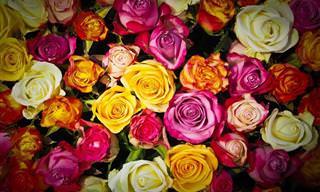 Coleção dos Melhores Posts de Flores do TudoPorEmail