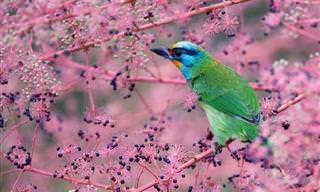 Imagens Impressionantes dos Pássaros de Taiwan