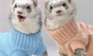 Adoráveis bichinhos em trajes de inverno