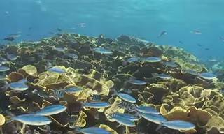 Descubra um lindo paraíso no oceano das ilhas Fiji!