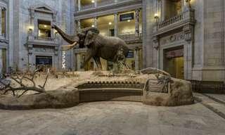 Uma Volta No Museu de História Natural