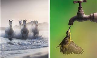 Images impressionantes da força da natureza