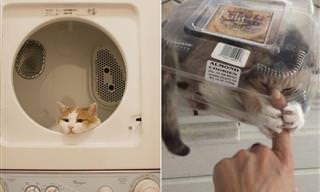 Gatos em lugares onde não deveriam estar