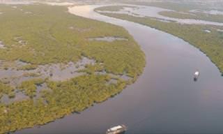 Um Passeio Aéreo Pelo Rio Amazonas!