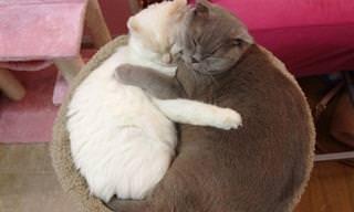 Amizade Duradoura de Animais: Lindo de Se Ver!