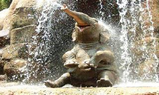 ADORÁVEL: Momentos de ternura com lindos elefantes