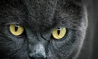 Hora do Teste: Você Sabe Tudo Sobre Gatos?