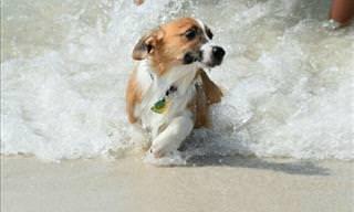 17 Cães e Suas Fobias Divertidas