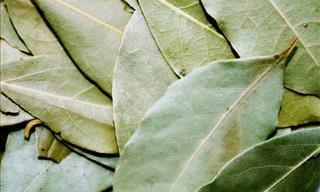 8 Benefícios Vitais à Saúde Das Folhas de Louro