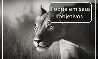 Mensagens de Sabedoria do Reino Animal