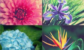 Envie Lindas Flores a Alguém Especial Em Sua Vida