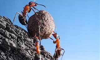 11 Curiosidades Fascinantes Sobre o Universo das Formigas