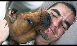 Para Que Despertadores? Cães São Melhores!