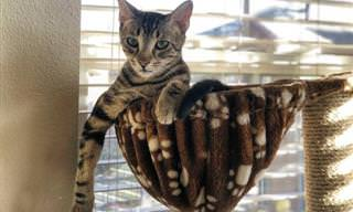 Prepare-se Para Melhorar Seu Dia Com Esses Gatinhos!