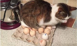 19 Gatos Que Fizeram Travessuras Intencionalmente