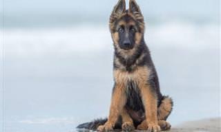 Os Vencedores do Concurso 'Fotógrafo Canino do Ano'