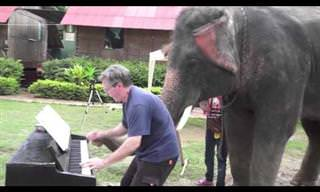 Conheça Peter, o elefante pianista!