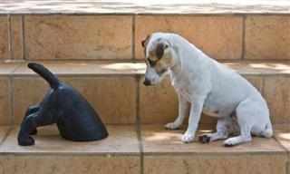 14 Cães Muito Engraçados e Confusos!