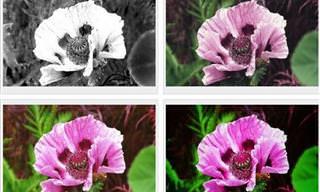 Escolha o filtro da foto <b>e</b> te diremos sua personalidade!