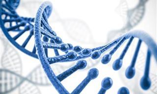 O que você se lembra de biologia básica?