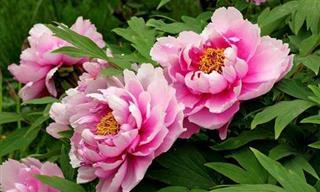 Que flor <b>é</b> esta?