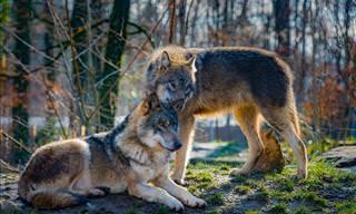 Em que animal você se transforma quando está apaixonado?