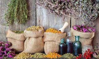 Quais Remédios Naturais Você <b>Conhece</b>?