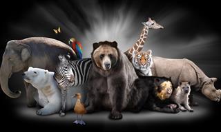 Qual é o seu animal de poder espiritual?