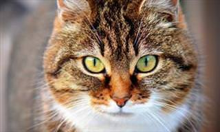 Descubra o <b>gato</b> interno que existe em você com este teste!