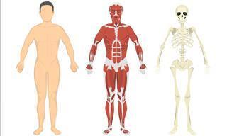 Quão bem você <b>conhece</b> a anatomia humana?