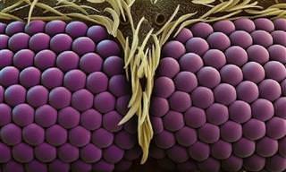 Consegue decifrar essas imagens microscópicas?
