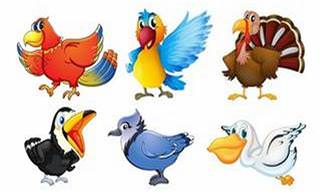 Se você fosse uma ave, qual seria?